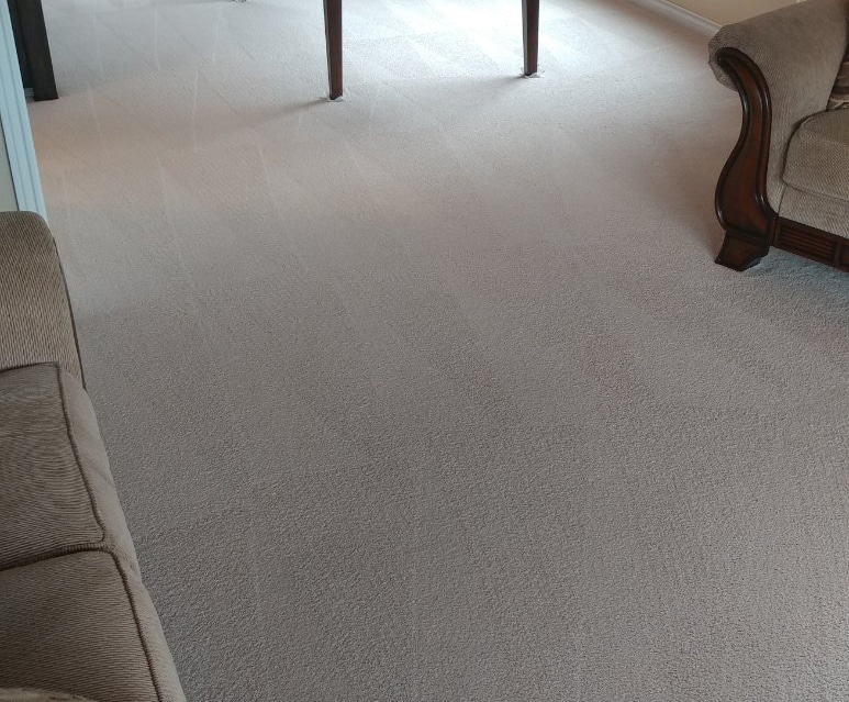 Best Carpet Cleaning Company In Corvallis Amp Albany Oregon